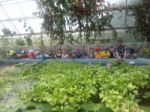 1Д в Ботаническом саду